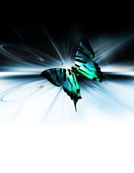 butterfly 088