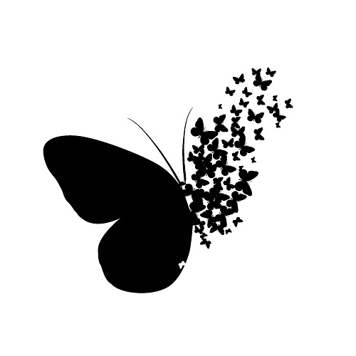 butterfly 092