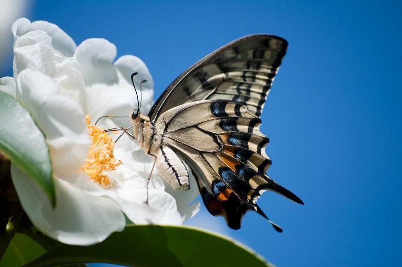 butterfly 099