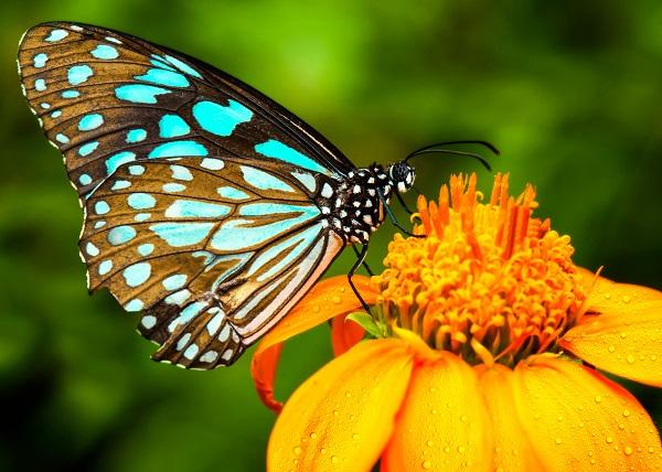 butterfly 101