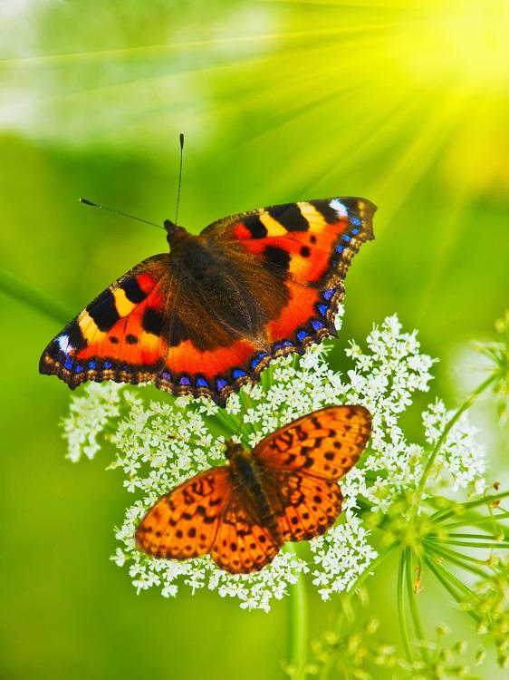 butterfly 104