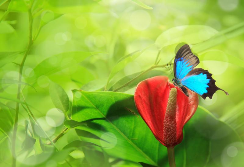 butterfly 108