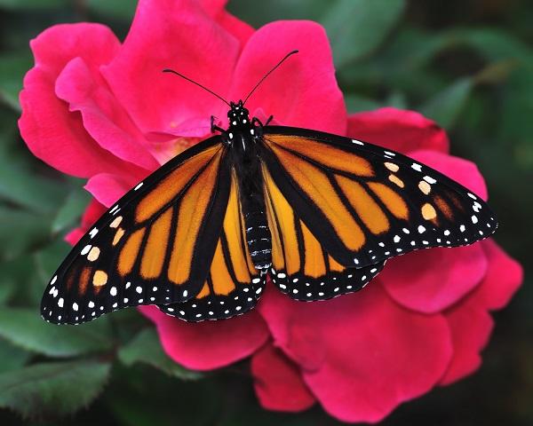 butterfly 109