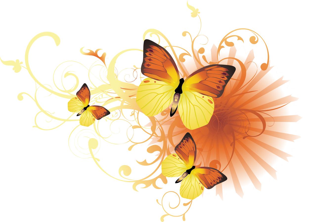 butterfly 112