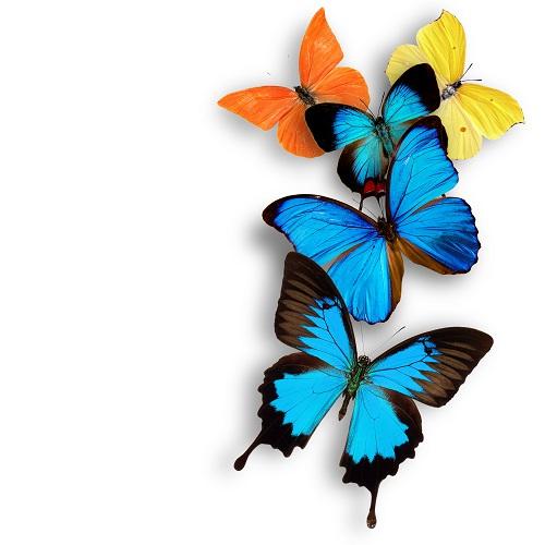 butterfly 126