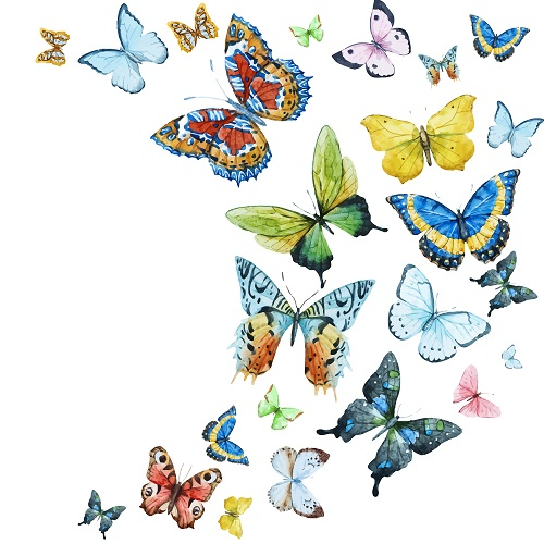 butterfly 117