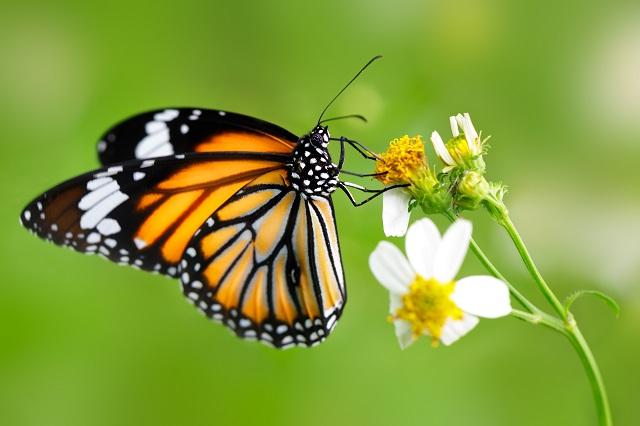 butterfly 118