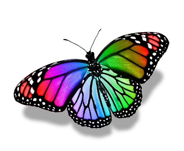 butterfly 119