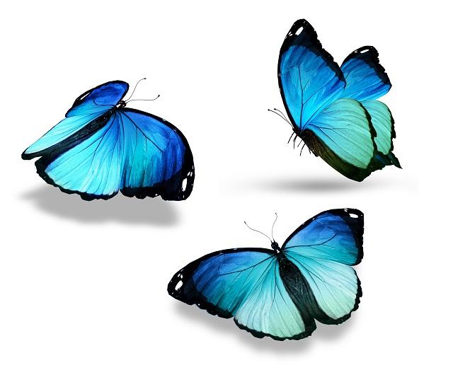 butterfly 129