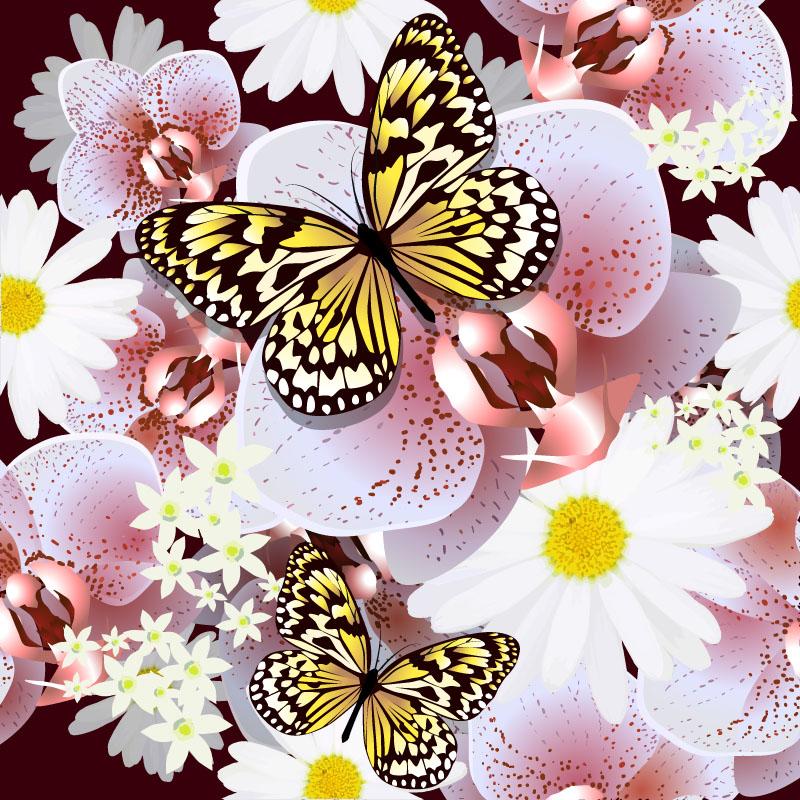 butterfly 135