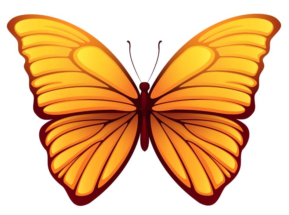 butterfly 139