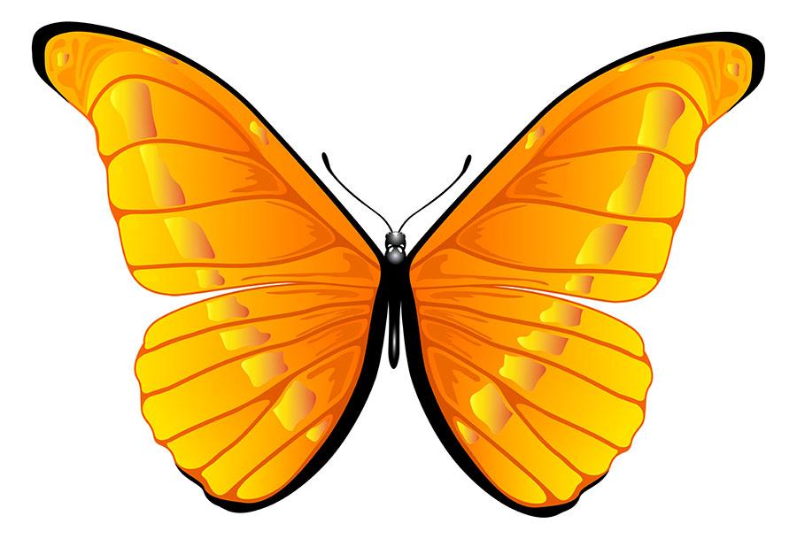 butterfly 141