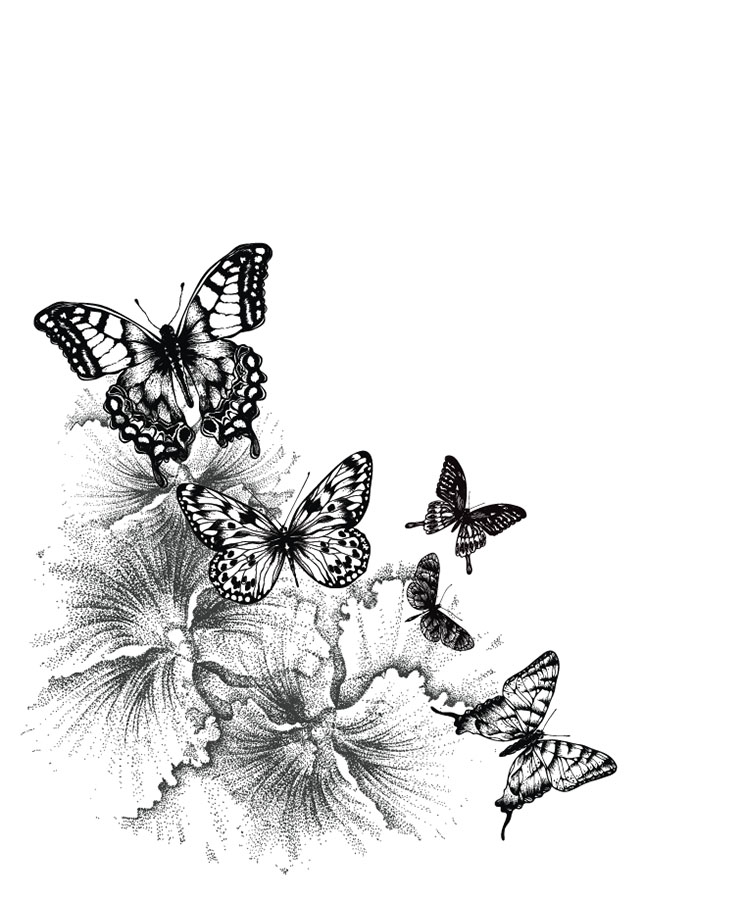 butterfly 143a