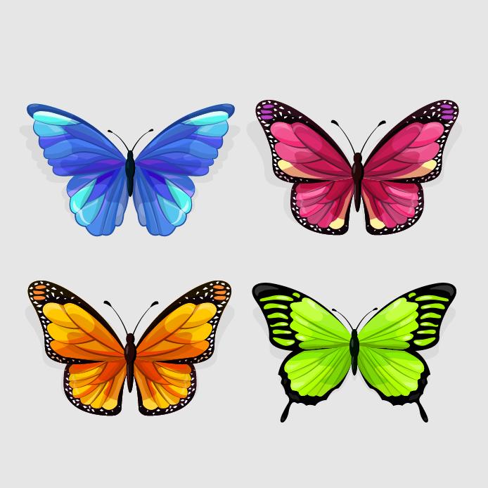 butterfly 145