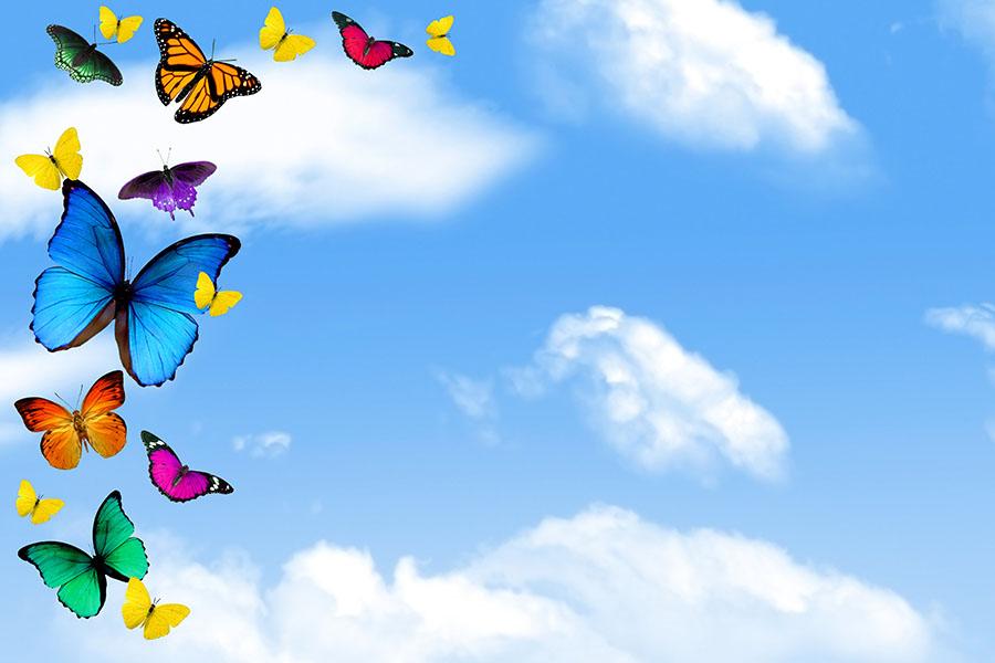 butterfly 147