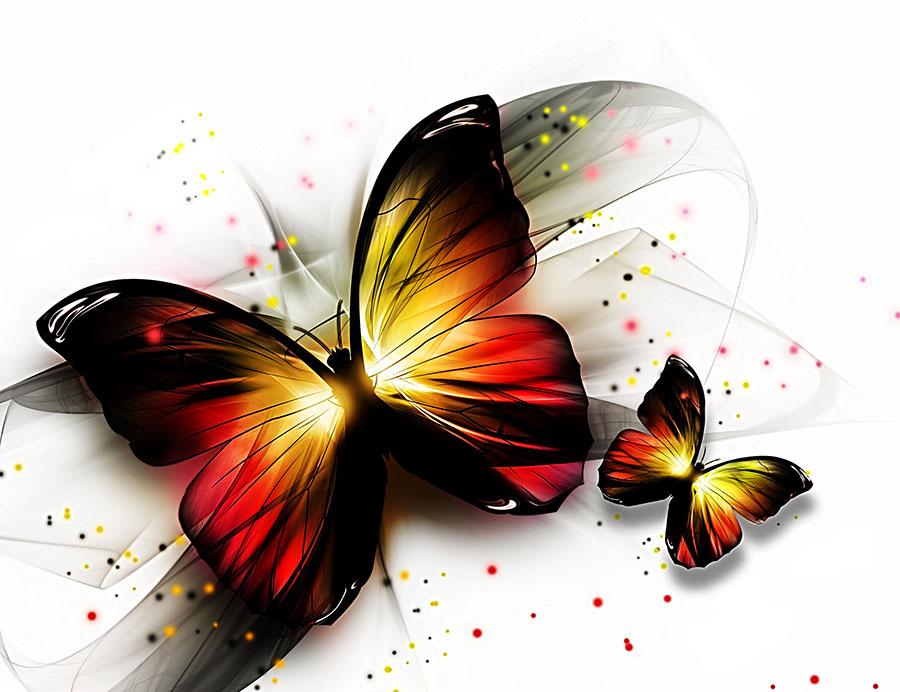 butterfly 148