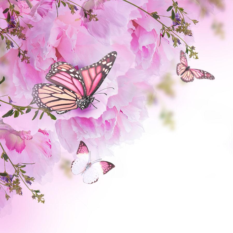 butterfly 149