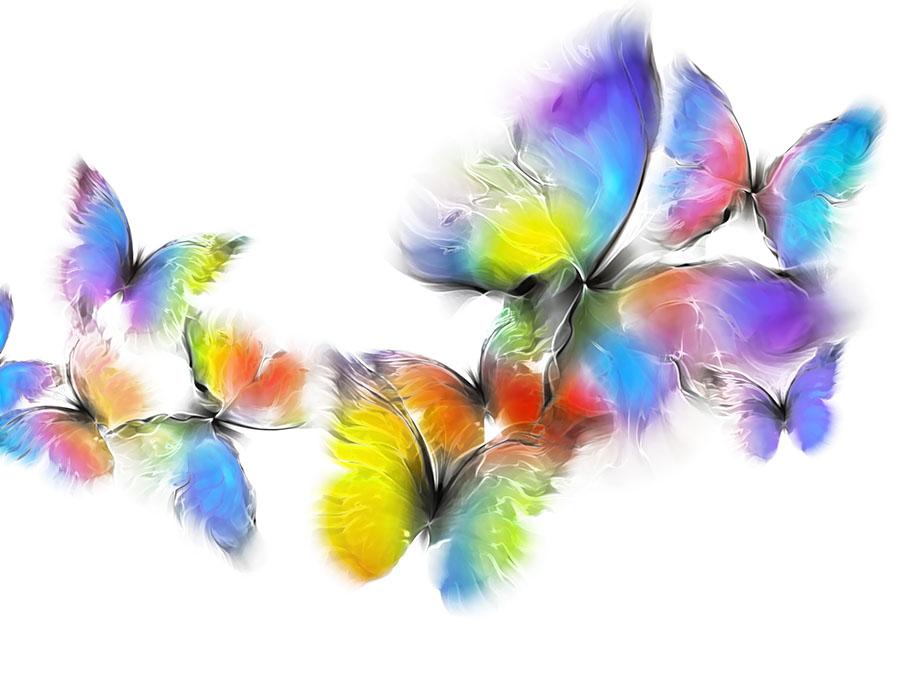 butterfly 150