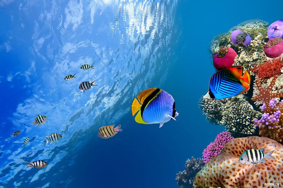 Ocean, Marea, Aquarium