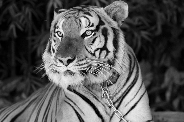 animal 002