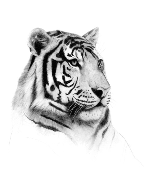animal 036