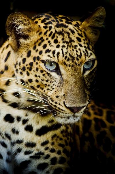 animal 039