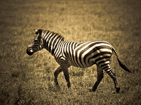animal 048